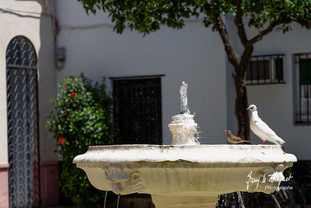 Seville-0222.jpg