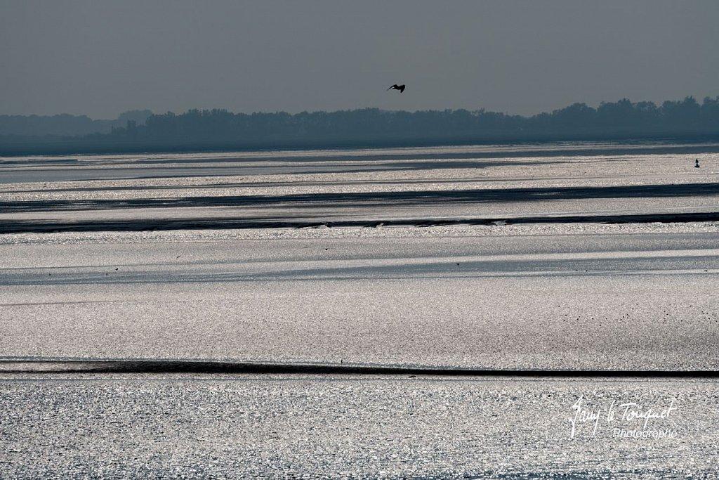 Baie-de-Somme-0218.jpg