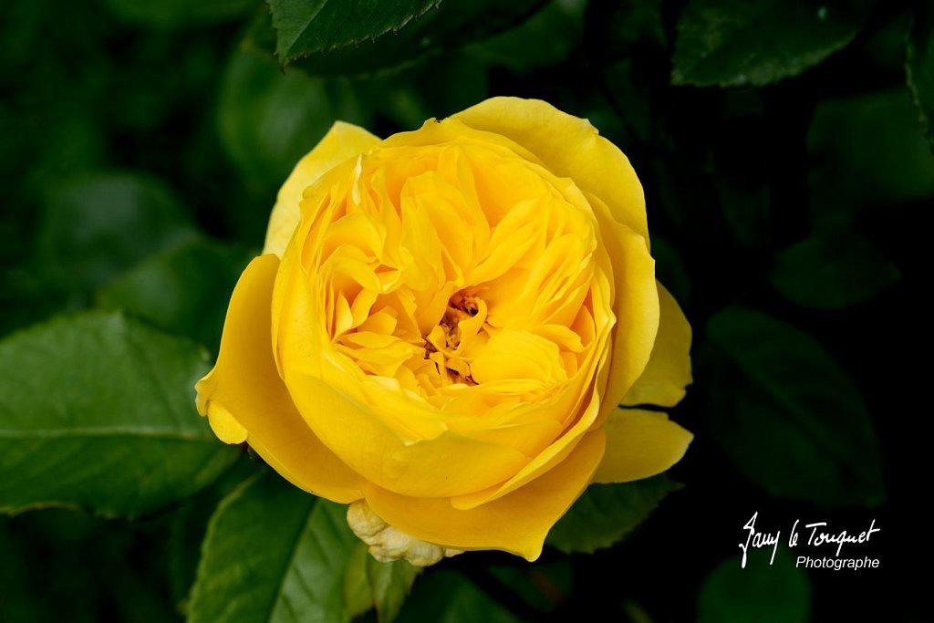 Veules-les-Roses-0103.jpg